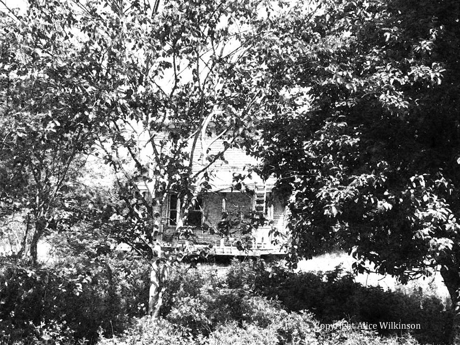 summertime house