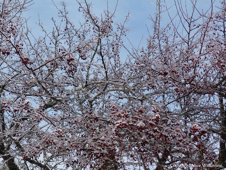 sky, cherries, ice