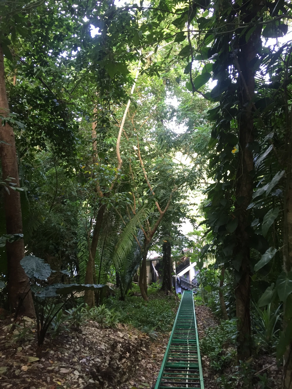 To get up and down around the lodge, we could either take a super long set of stairs (a workout, for sure!) or enjoy the ride up or down an electric-powered rainforest trolley.