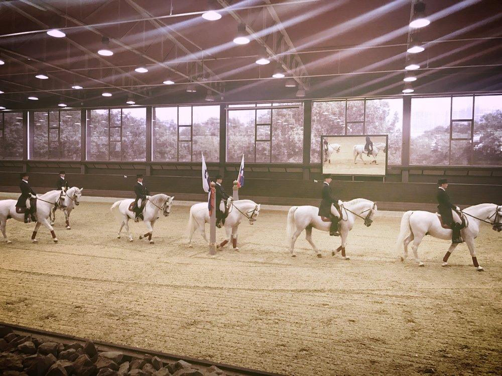 "These beautiful horses bred in Lipica go through ""elementary school through high school"" to learn all sorts of tricks."
