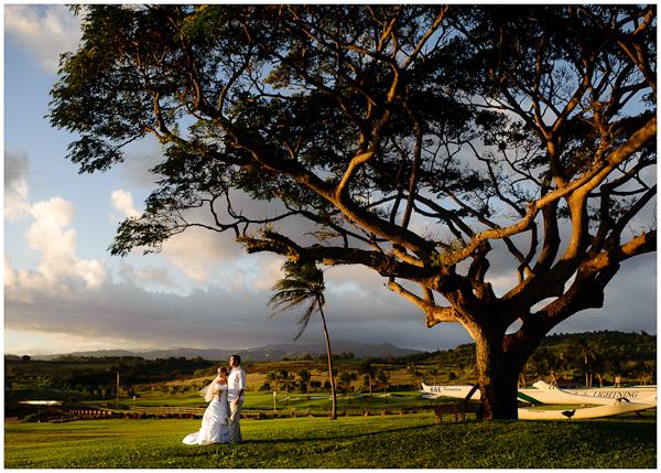 hawaii destination wedding photo tree