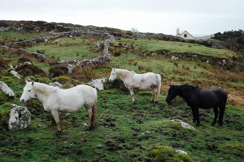 Ireland-Road-Trip-014.jpg