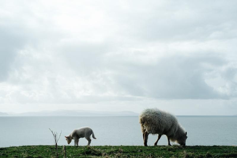 Ireland-Road-Trip-057.jpg