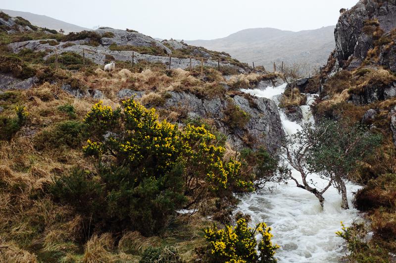 Ireland-Road-Trip-086.jpg