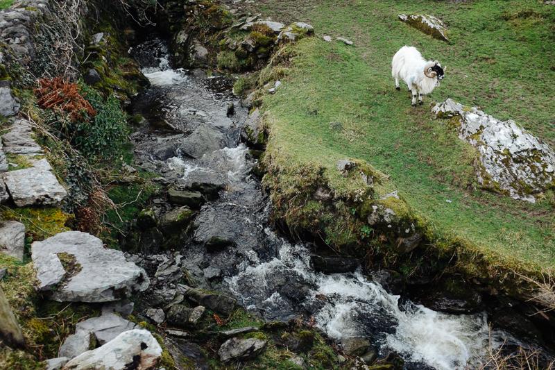 Ireland-Road-Trip-092.jpg