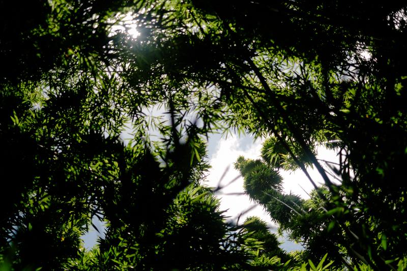 maui-family-fujifilm-104.jpg