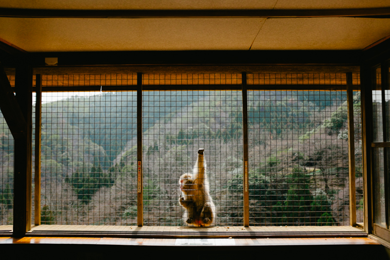 japan-travel-from-oregon-165.jpg
