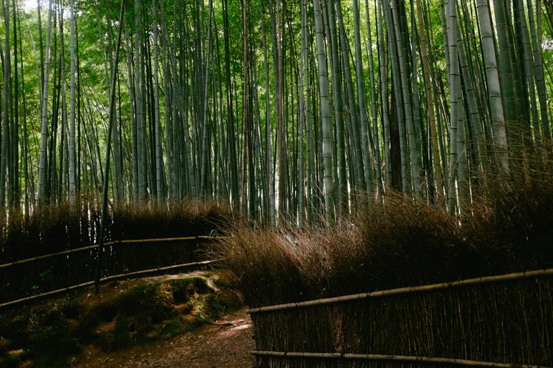 japan-travel-from-oregon-173.jpg
