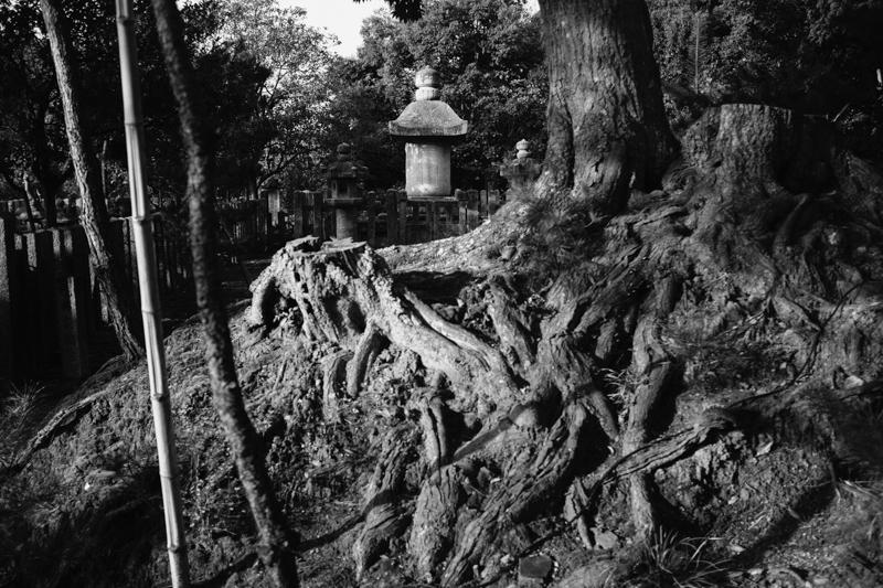 japan-travel-from-oregon-186.jpg