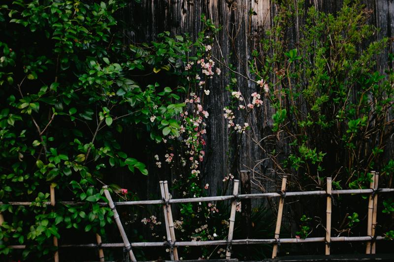 japan-travel-from-oregon-198.jpg