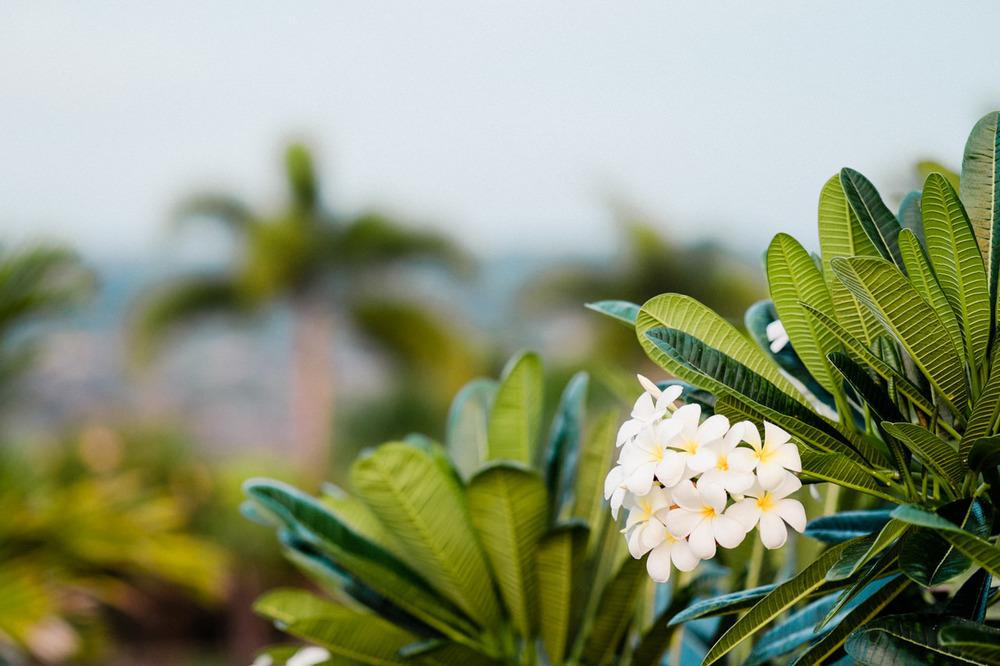 hawaii-island-family-vacation-19.jpg