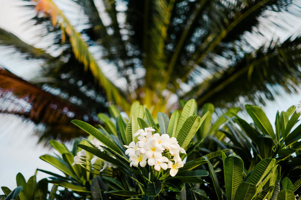hawaii-island-family-vacation-88.jpg