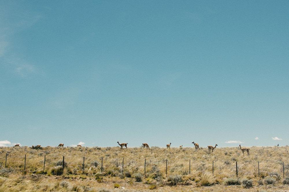 argentina-patagonia-travel-052.jpg