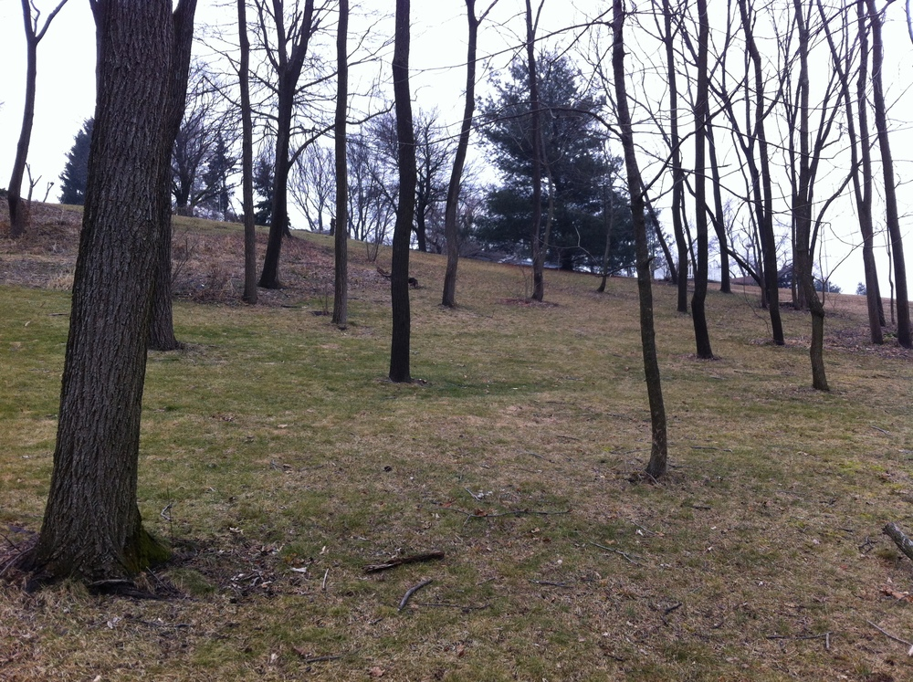 Hill Tender's Bucks County hillside.