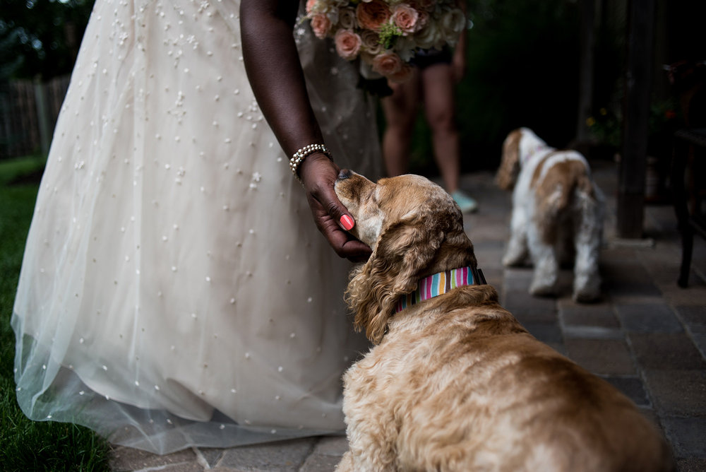 bride-with-dogs-omaha-wedding-phtographer.jpg