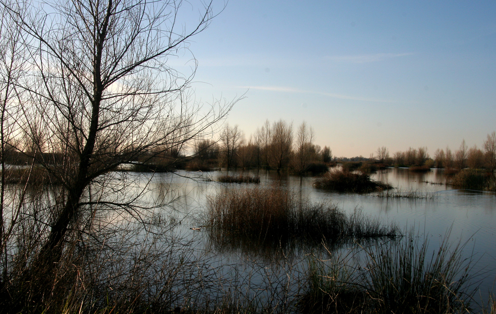The wetland, flooded up for the winter.