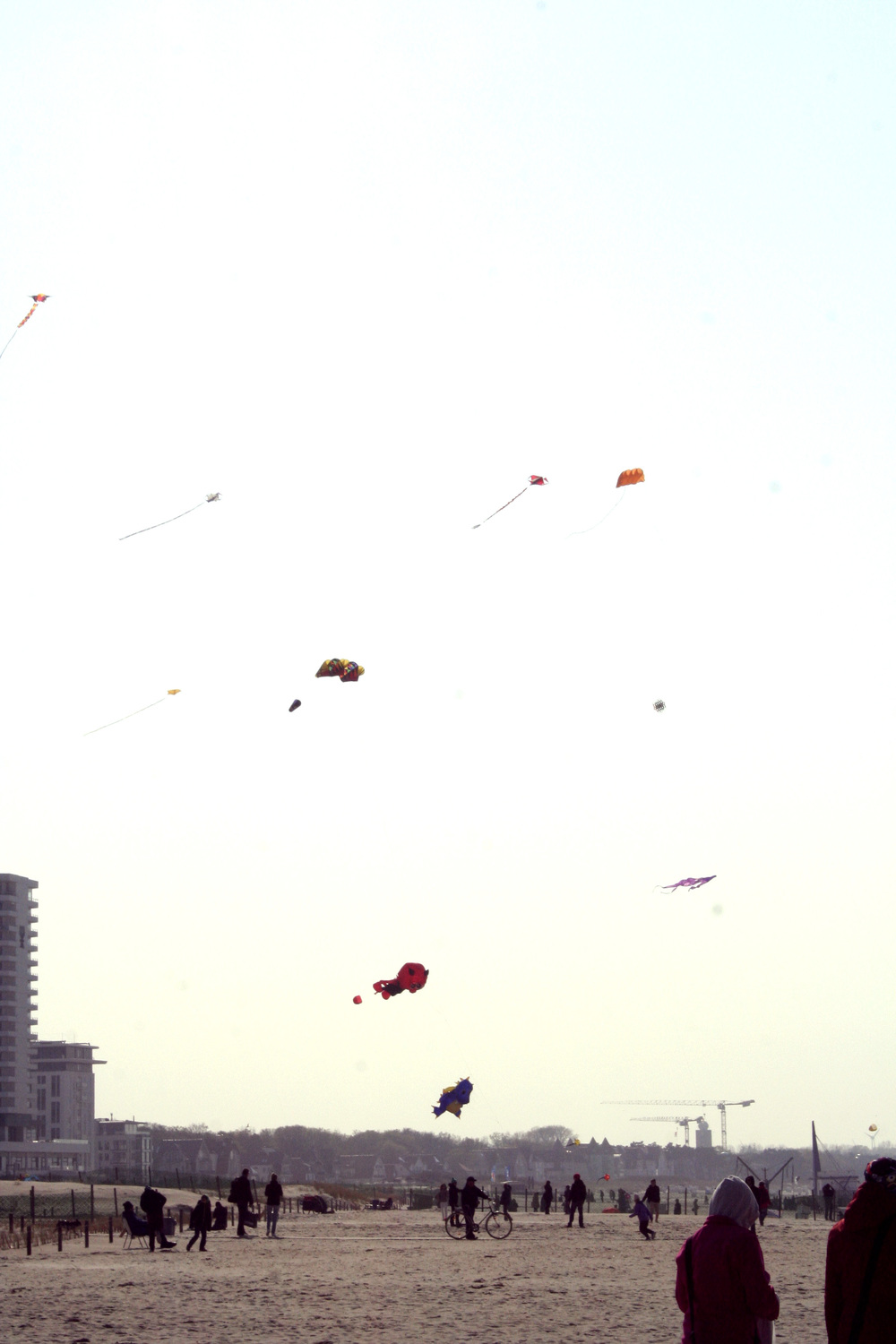 Check out those kites. Some of them are giant fish.