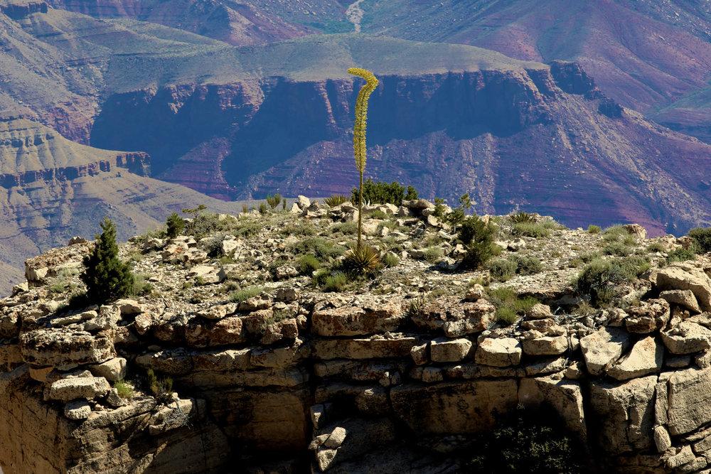 Grand Canyon-2017--3.jpg
