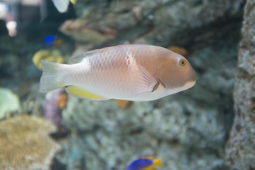 Aquarium of the Pacific-3-30-16-1352.jpg