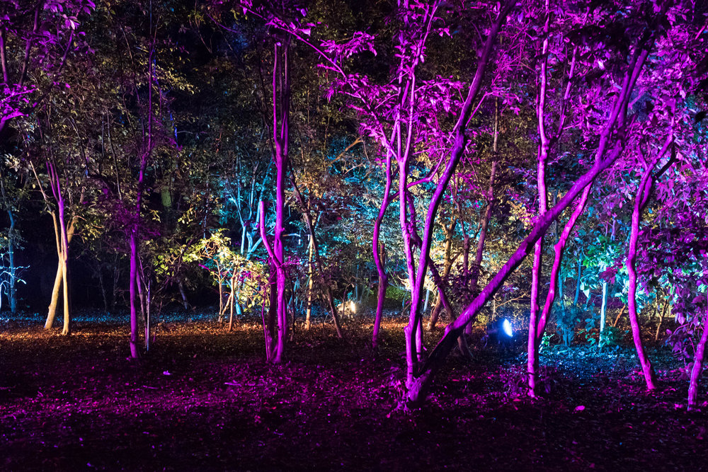 Descanso Gardens-2016-4803.jpg