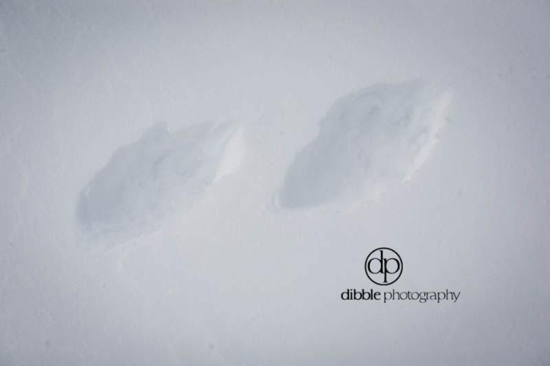 via-rail-ski-trip-12.jpg