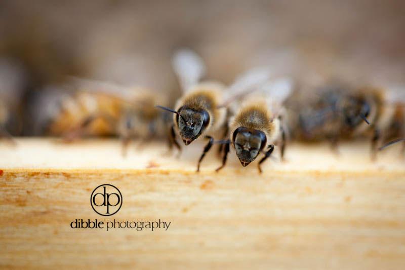 beekeeping-s03.jpg