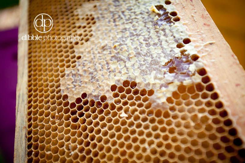 beekeeping-s04.jpg