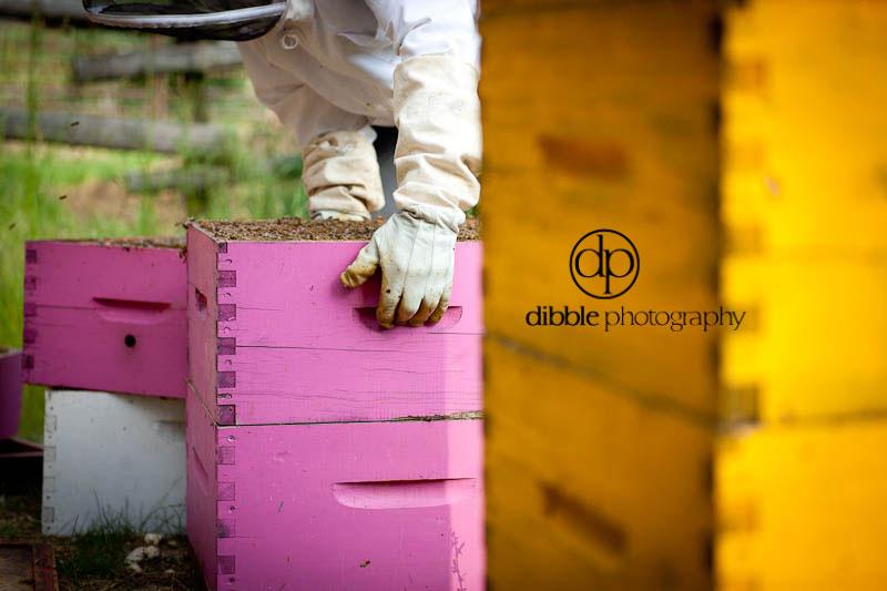 beekeeping-s05.jpg