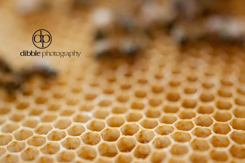beekeeping-s06.jpg