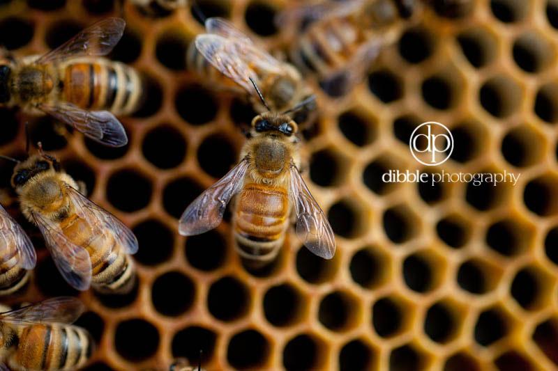 beekeeping-s08.jpg