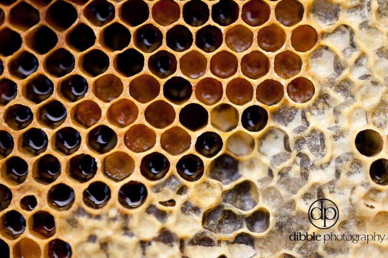 beekeeping-s10.jpg