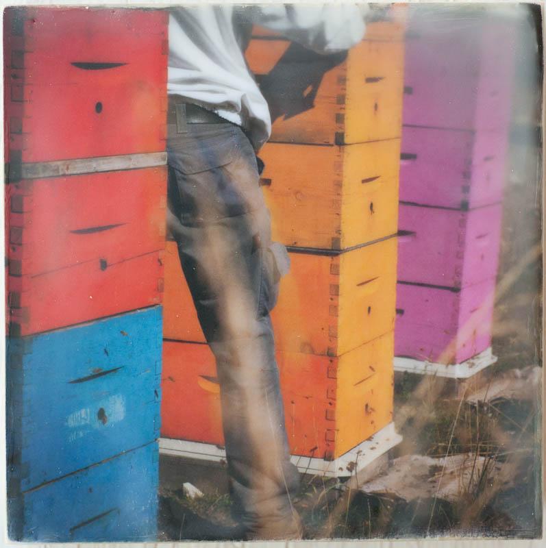 encaustic-bees-17.jpg