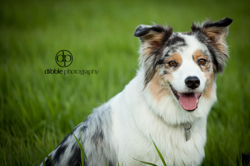 happy dog portraits