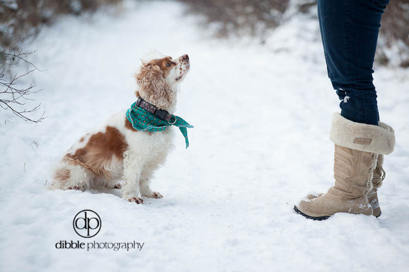 pet-photography-golden-lp01.jpg