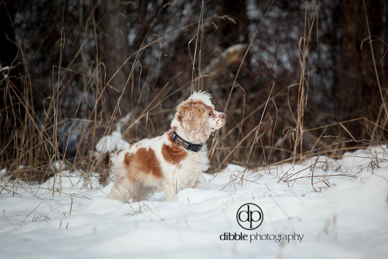 pet-photography-golden-lp04.jpg