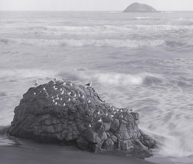 Muriwai rock & gulls