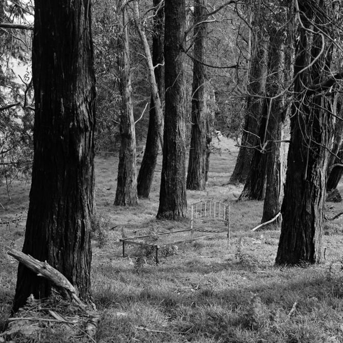 longerbedforest 001