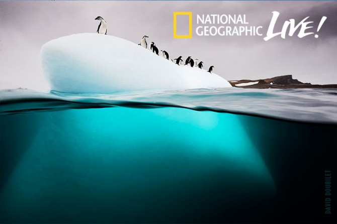 Penguins-on-ice-floe,-Antarctica_CR-David-Doubilet