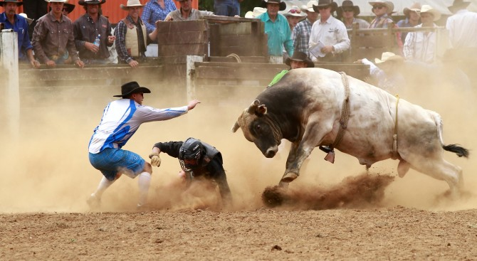 D_Hon_Stop the bull_Jenny Atkins