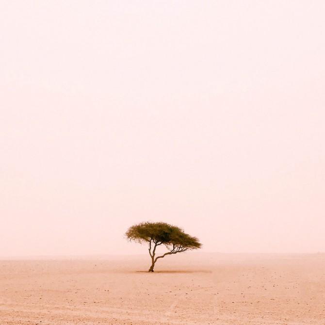 Ruairidh McGlynn — first place, Trees