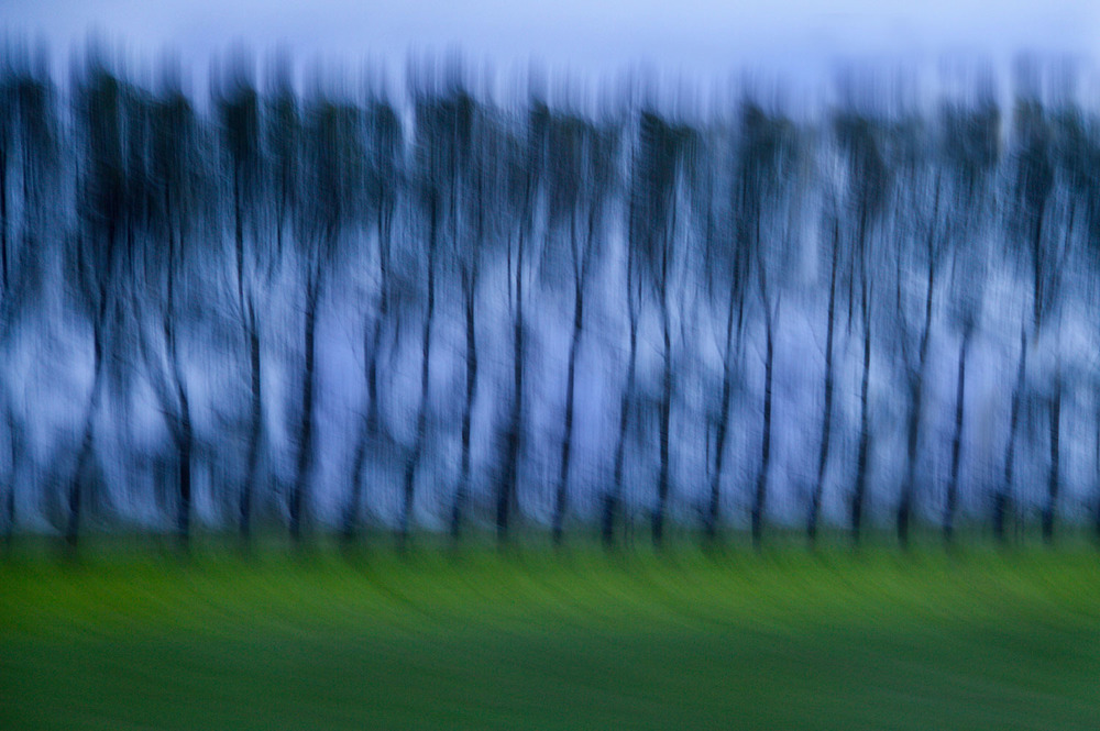 Poplars, Sheryl Williams