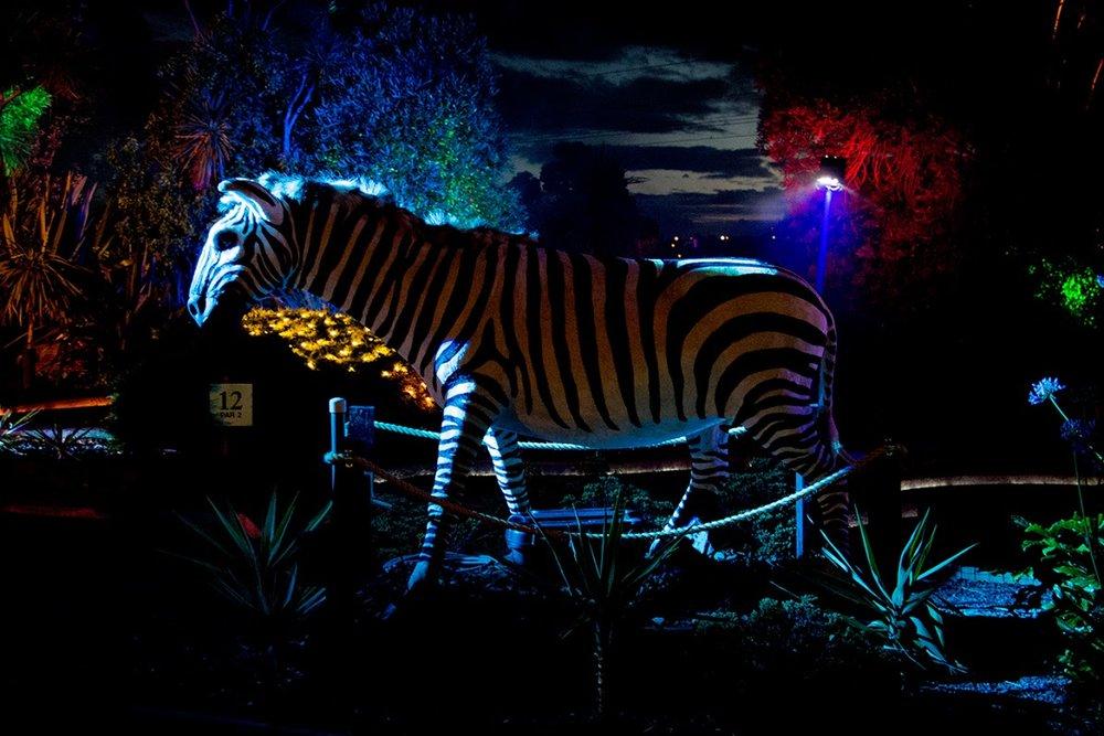 Morghana Godwin, Light Up The Holidays 2015. Amateur Canon 70D set-up, low light.