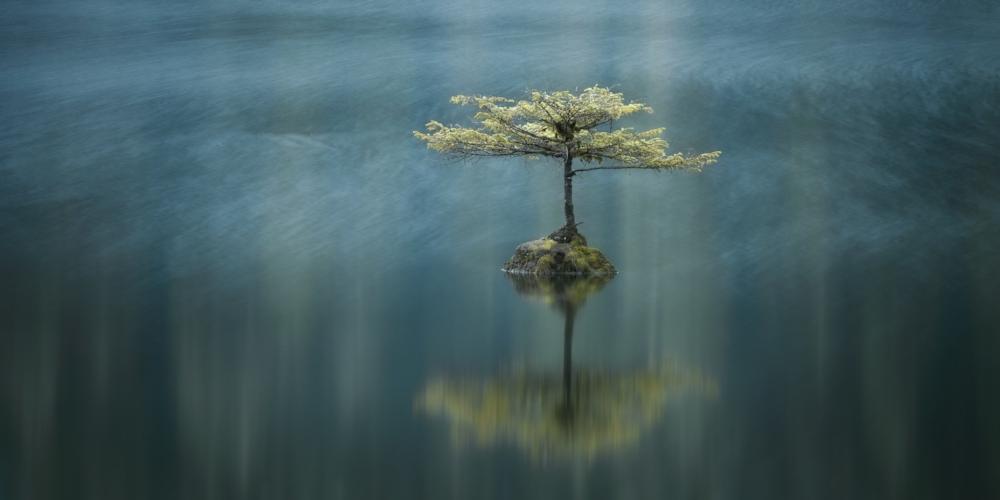 Adam Gibbs, Temperate breeze, Fairy Lake, Port Renfrew, Vancouver Island, British Columbia, Canada
