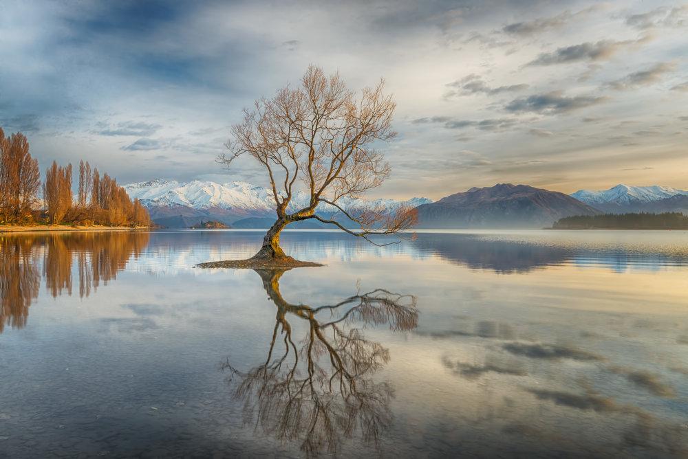 Linda Cutche, Wanaka tree, 3rd, New Zealander, National Awards, Nature, 2017 Sony World Photography Awards