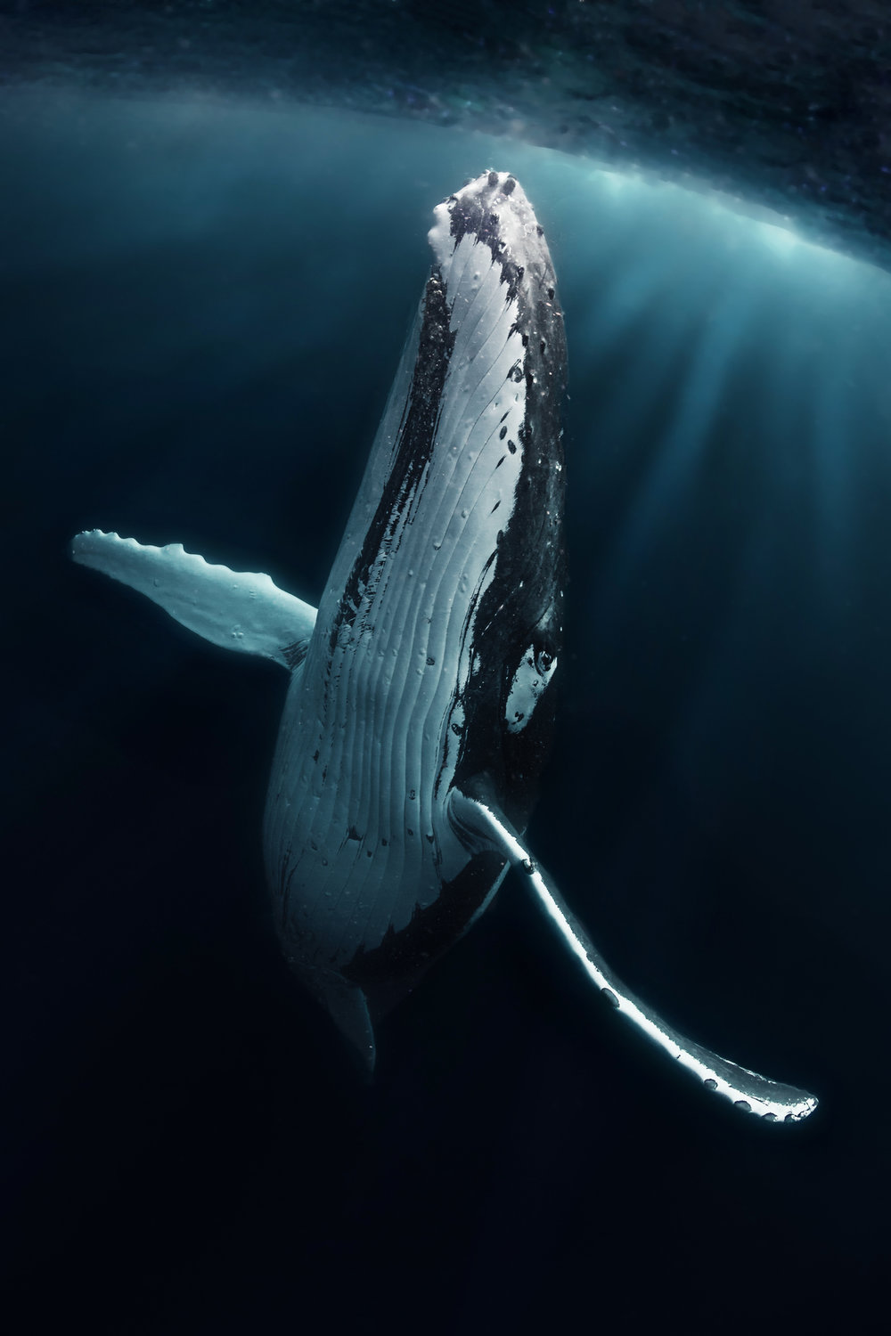 second: Grant Thomas, An Elegant humpback whale poses for the camera