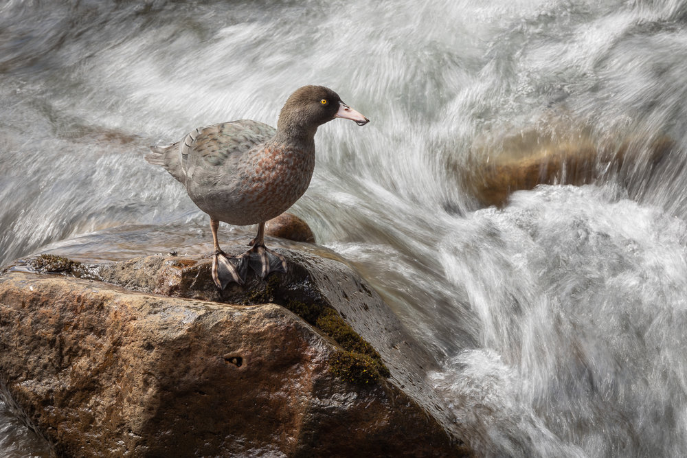 - How to make people give a damnWildlife conservationist and photo artist Judi Lapsley Miller explains the three key elements to powerful advocacy photosLearn about Judi's 'Art of Birding' challenges