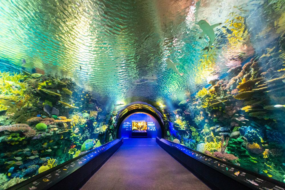 Ocean Wonders: Sharks!