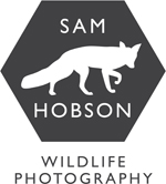 SAM HOBSON WILDLIFE AND CONSERVATION PHOTOGRAPHY