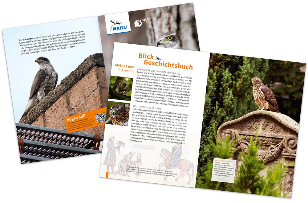 sam_hobson_goshawk_brochure