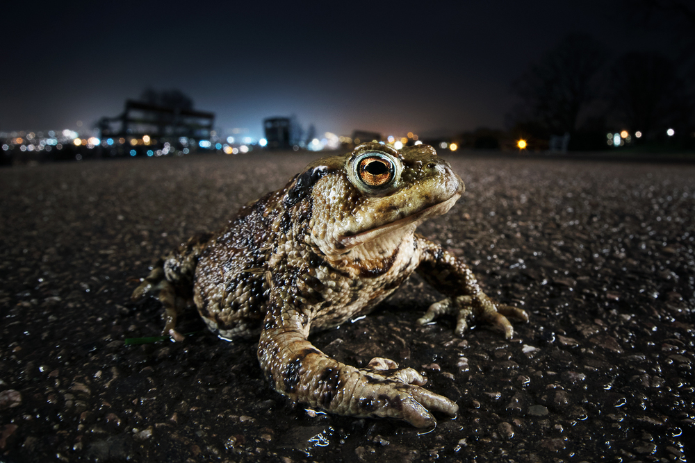 Toad March